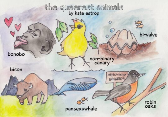 The Queerest Animals